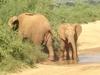 Everest Africa Safaris - Mombasa