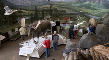 Exhibits In The Denali Visitor Center