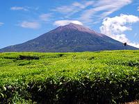 Explore Jambi Adventure and Culture Paradise