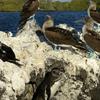 Birds On Elizabeth Bay