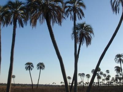 El Palmar National Park