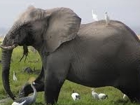 Amboseli Camping Safari (Non-Resident)