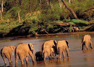Elephant Rufiji River