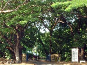 George Brown Darwin Botanic Gardens