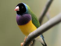 Mantenga el área de Río Importante para las Aves