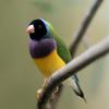 Yinberrie Hills Área Importante para las Aves