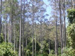 Negro Bulga Estado Área de Conservación