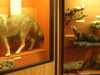The Michigan Wildlife Gallery