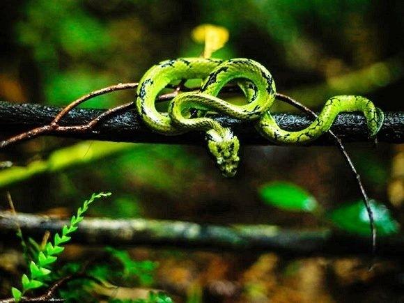 Sinharaja Rainforest Full Day Trekking Photos