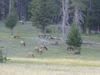 Fairy Falls Trail - Yellowstone - USA