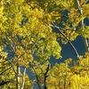 Fall Boulder Mountain