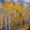 Fall Colors At Telluride Ski Area
