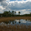 Farles Prairie In Ocala National Forest