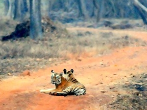 Tadoba National Park