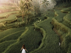 Ubud Village And Bali swing Full Day Tour Photos