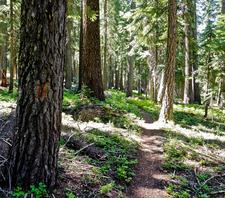 Ferndell Trail 204 - Tonto National Forest - Arizona - USA