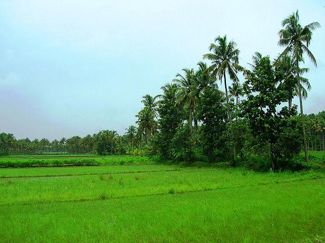 Green Kerala Package Photos