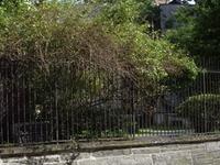 En primer lugar Shearith Israel Graveyard