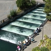 Fish Ladder - OR Bonneville Dam
