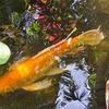 Fish - Sunken Gardens - St. Petersburg