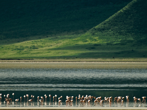 3 Day Manyara, Ngorongoro and Tarangire National Park