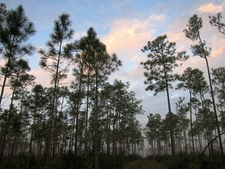 FL Everglades National Park - Long Pine Key Nature Trail