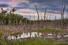FL Everglades Swamp Landscape