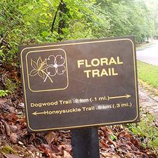 Floral Trail