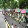 Flower Market In Bacolod Public Plaza