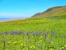 Flowers Along Rhossili Bay - Swansea UK