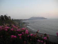Flowers La Estrella Beach View