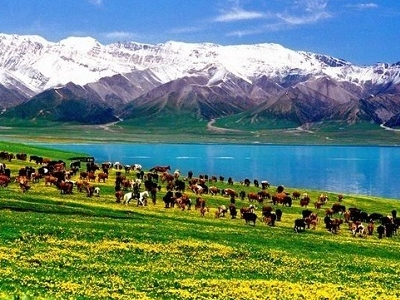 Flowers & Mountains With Sayram Lake