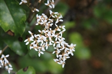 Flowers @ Rangitoto Island Reserve NZ