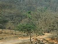 Log Huts Forestales