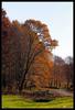 Forest of Nagykanizsa