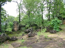 Forests Near Pachmarhi