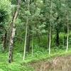 Planters Camp