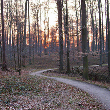 Winter Sunset In The Sonian Forest.