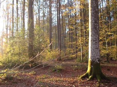Forest In Eure-et-Loir
