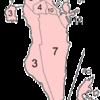 Former Regions Municipalities Of Bahrain