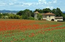 France Provence - Poppy Cultivation