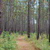 Francis Marion National Forest