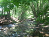 Frankford Creek