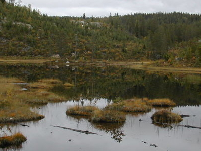 Small Lake In Fyresdal