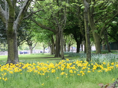 Flowers In Fairview Park