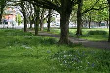 Fairview Park Dublin