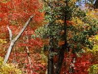 Red Rock-Secret Mountain Wilderness