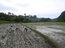 Farming At Caramoan