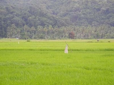 Farms At Caramoan