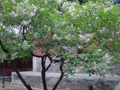 Flower In Fayuan Temple